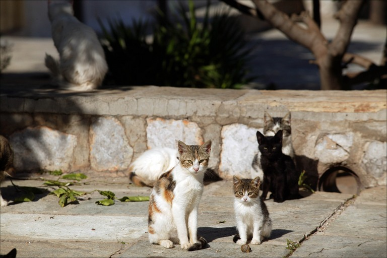 STRAY CATS: WHAT TO DO